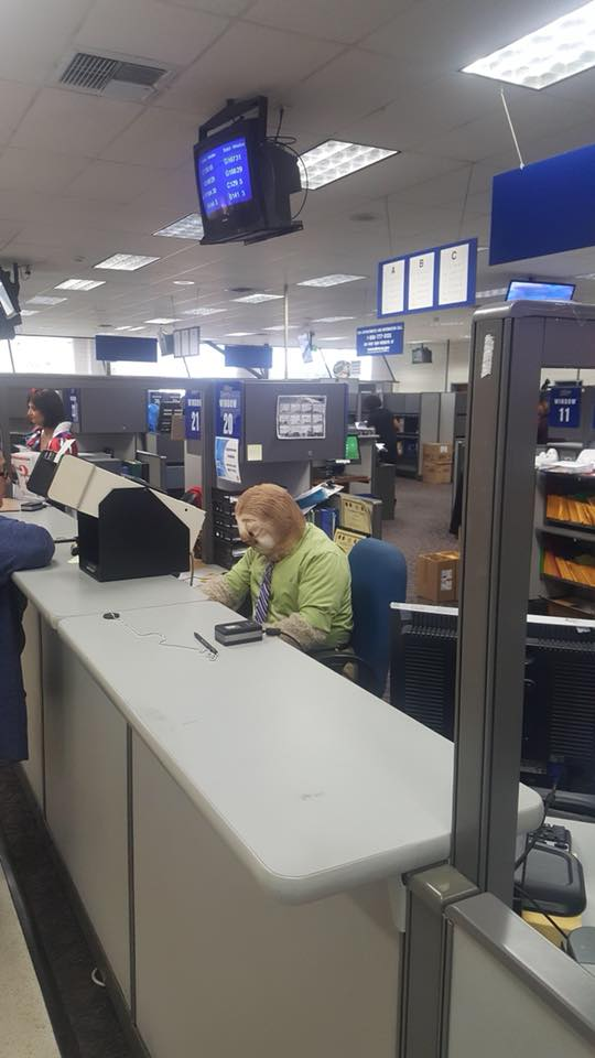 DMV Sloth